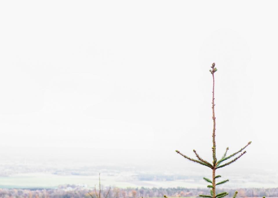 Perspektivs, tree top,