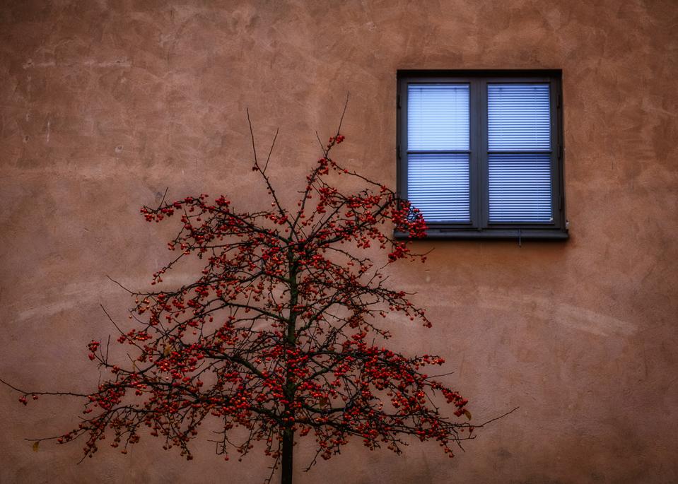 Winter, Blue, treee