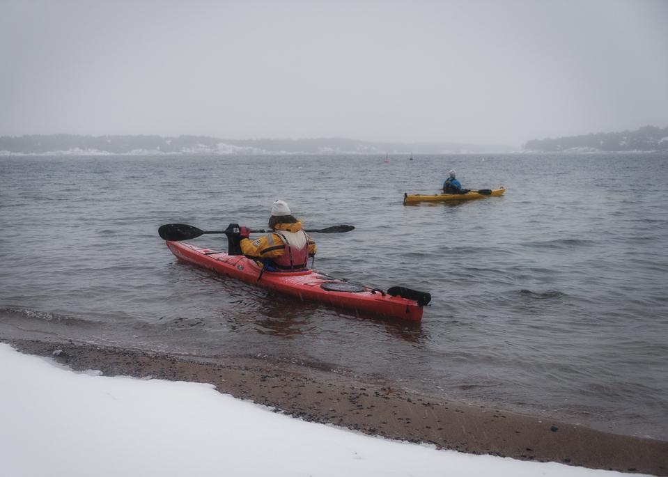 seabird, kayak,